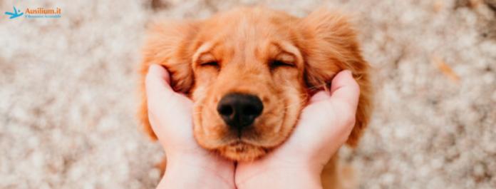 Animali e bambini disabili: come migliora la vita quotidiana.